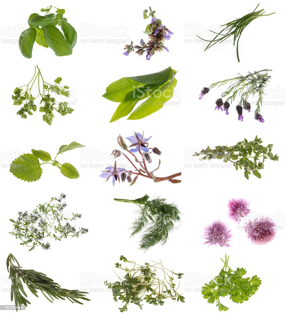 herb collection stock photo