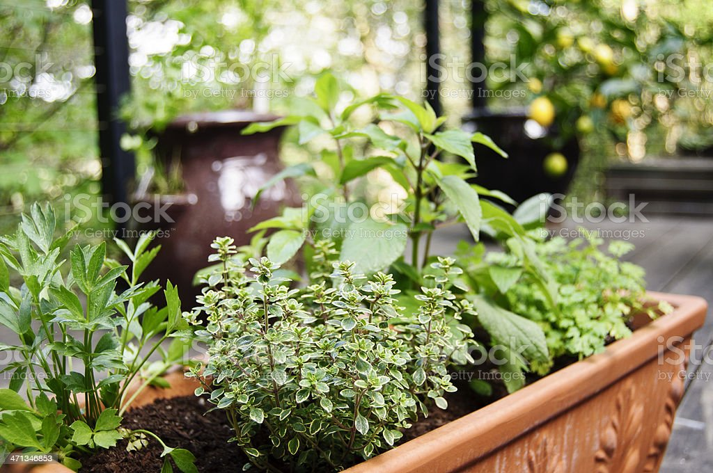 Herb Container stock photo