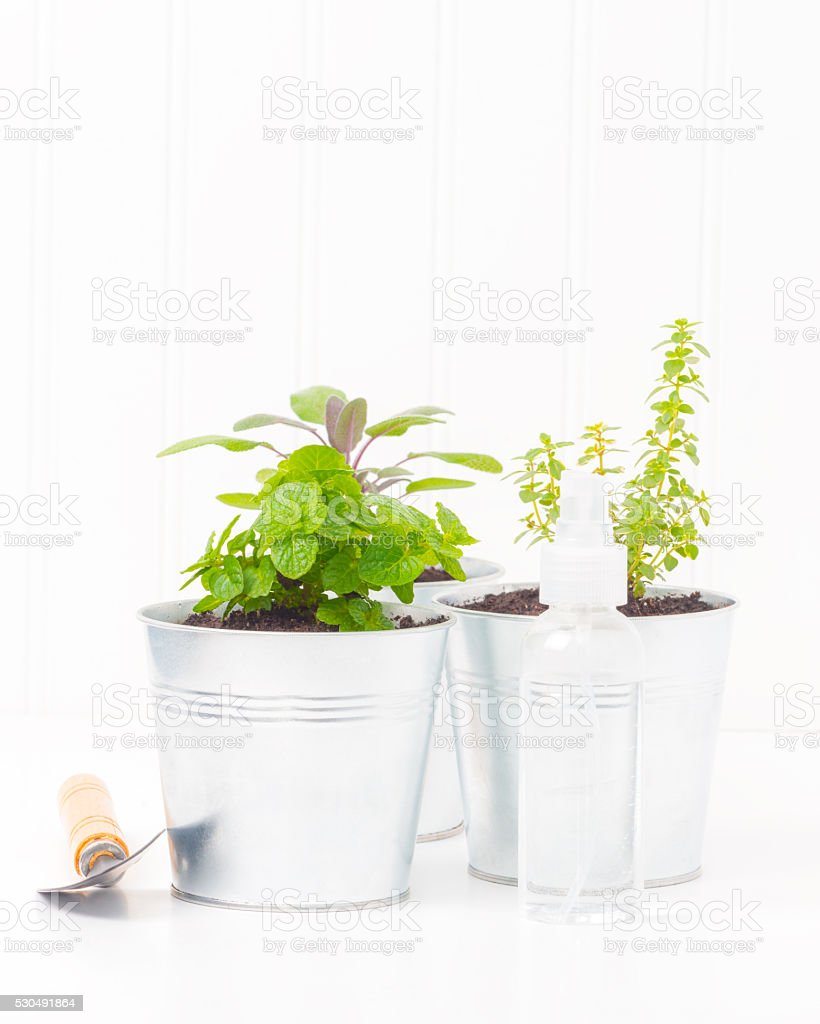 Herb Containers stock photo