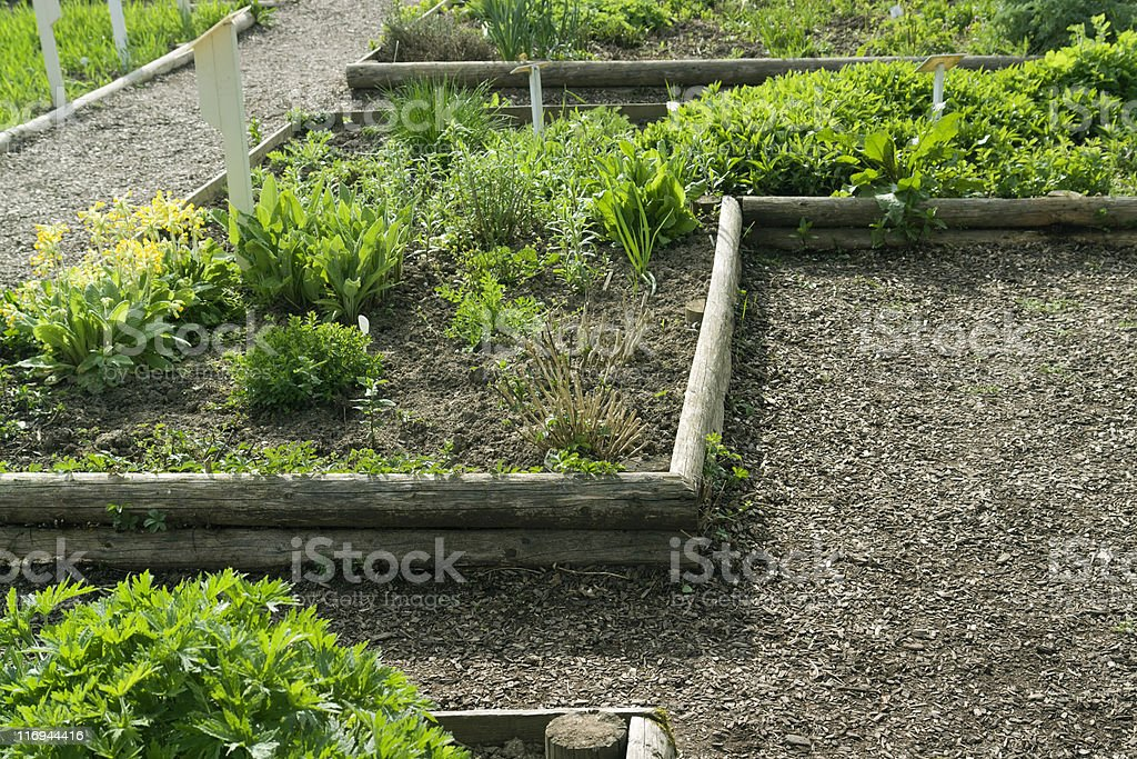 herb garden detail royalty-free stock photo