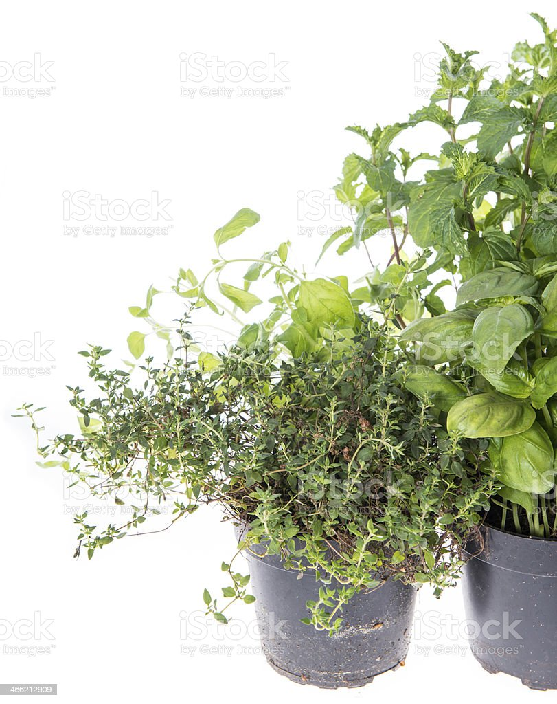 Herb Garden isolated on white royalty-free stock photo