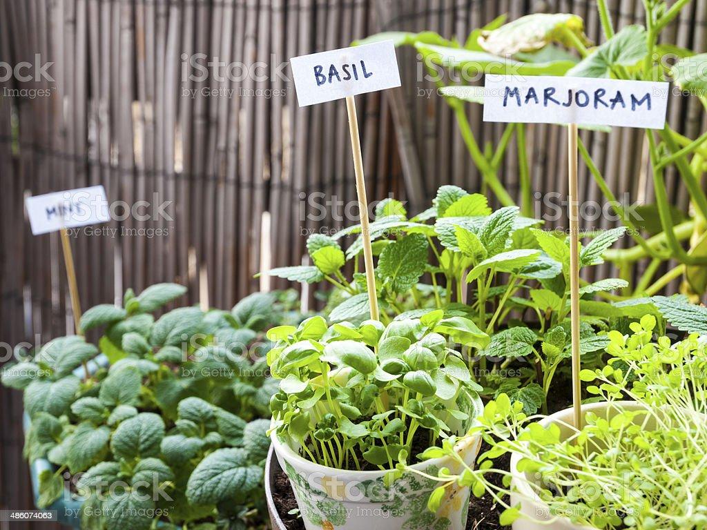 Herb garden on a balcony stock photo
