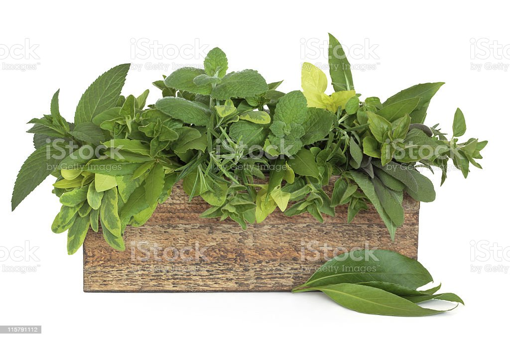 Herb Garden stock photo