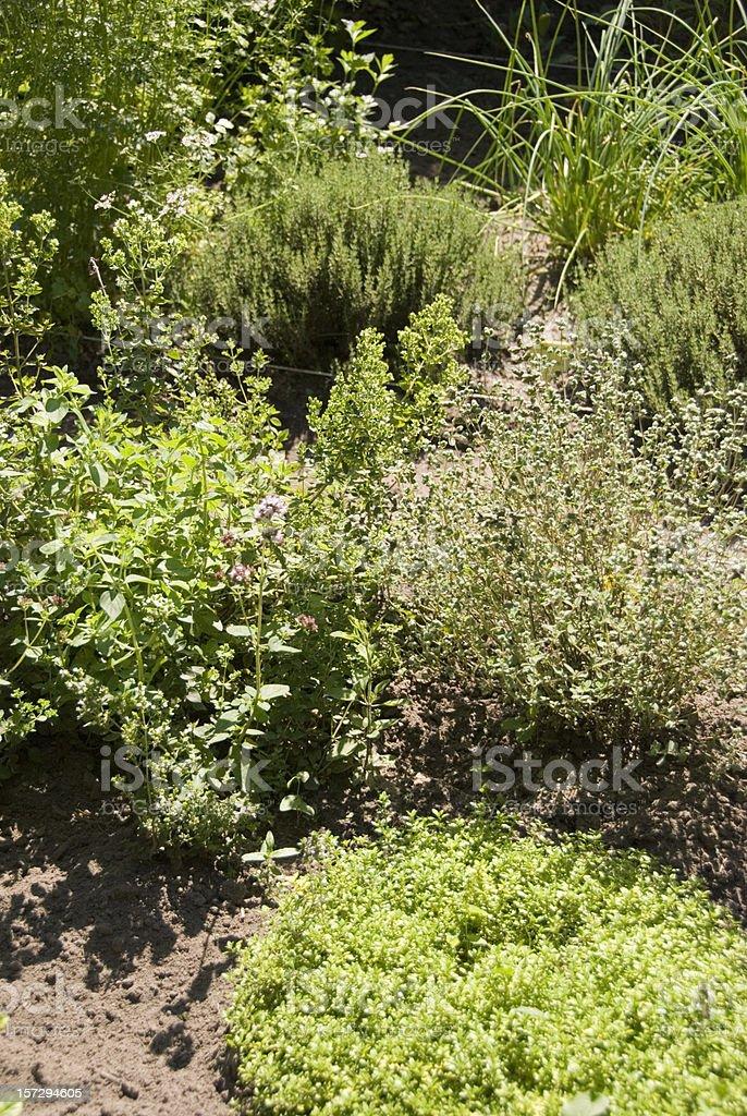 Herb garden royalty-free stock photo