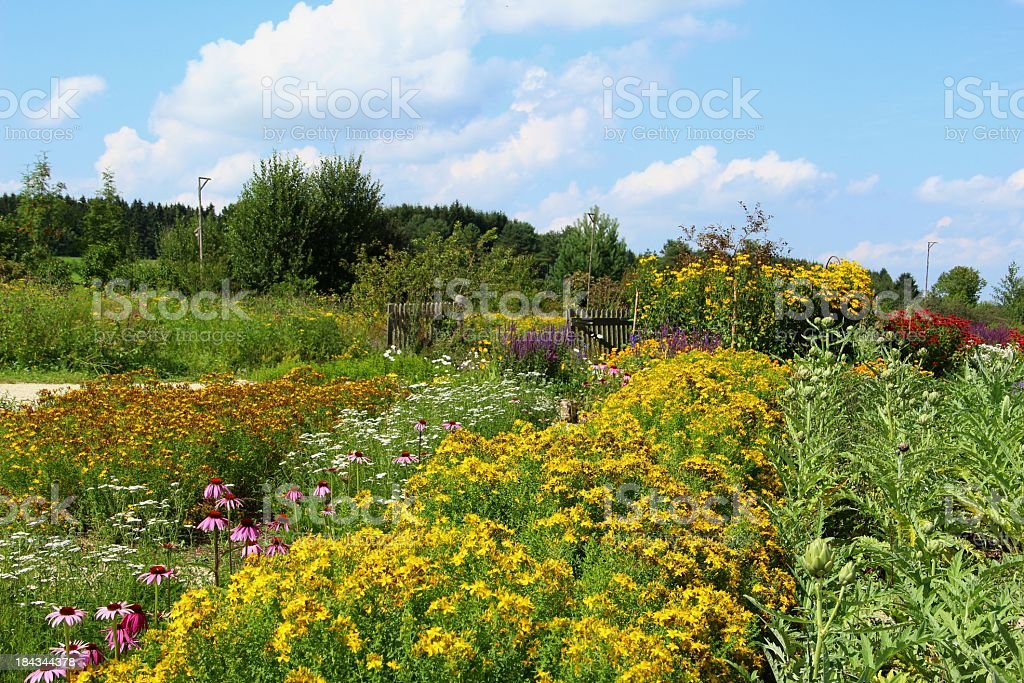 Herb garden royalty-free stock photo