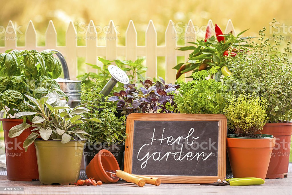 Herb garten stock photo