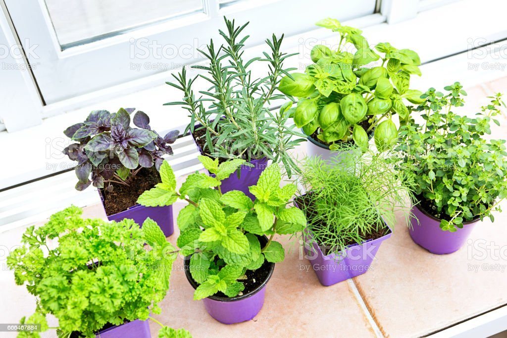 Herb Garden Seedling Plants in Retail Containers stock photo