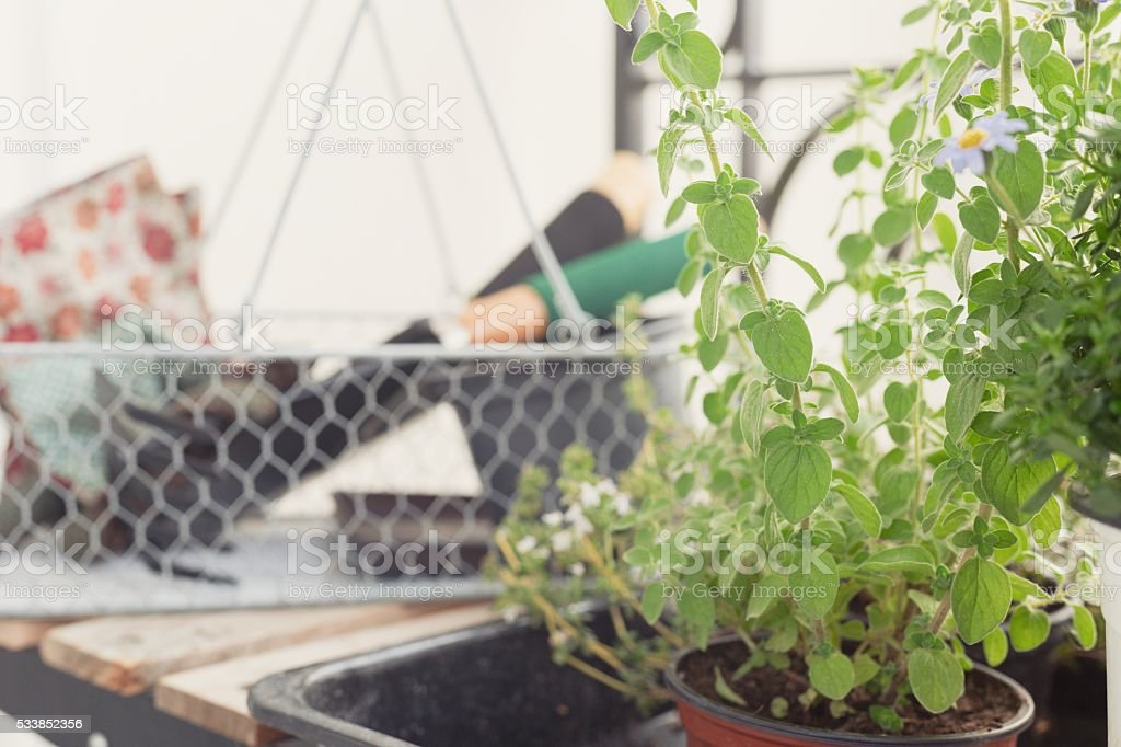 Herb garden thyme and oregano stock photo
