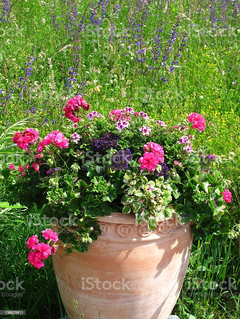 Herb garden with flower pot stock photo