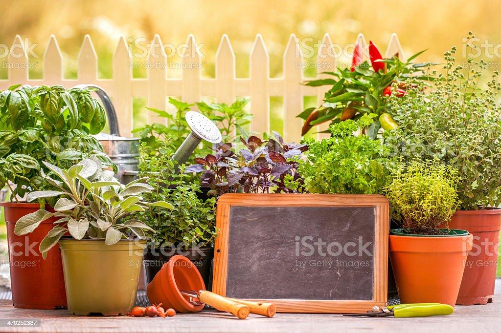 Herb garten stock photo