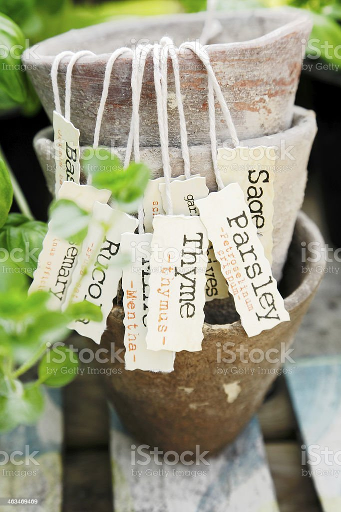 Herb label stock photo