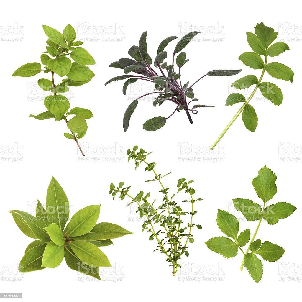 Herb Leaf Collection. royalty-free stock photo