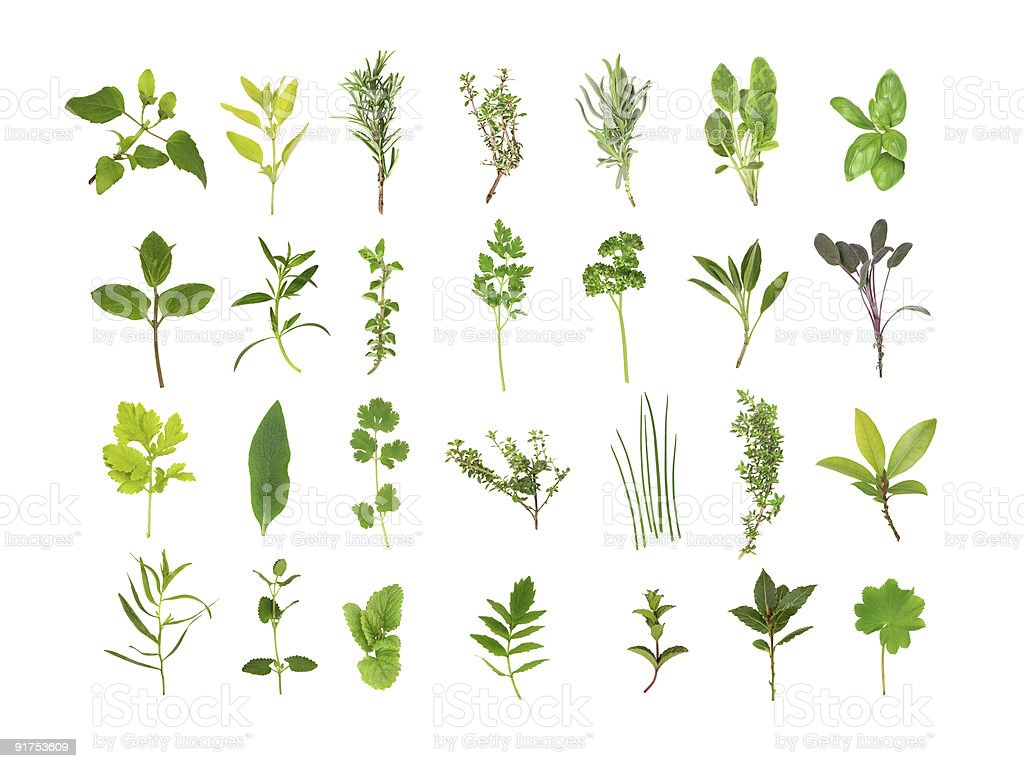 Herb Leaf Selection stock photo