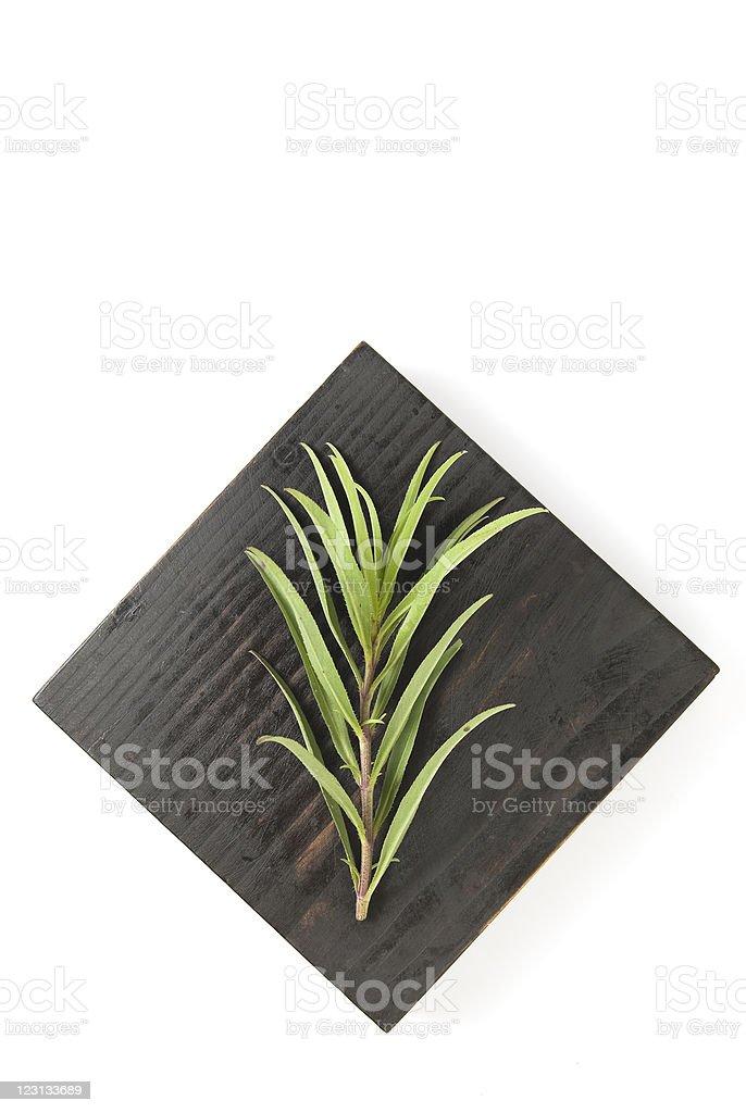 Herb royalty-free stock photo