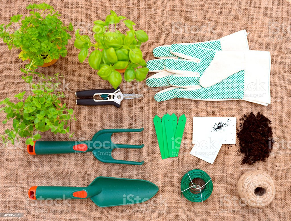 Herb  Seedings and Garden Tools stock photo