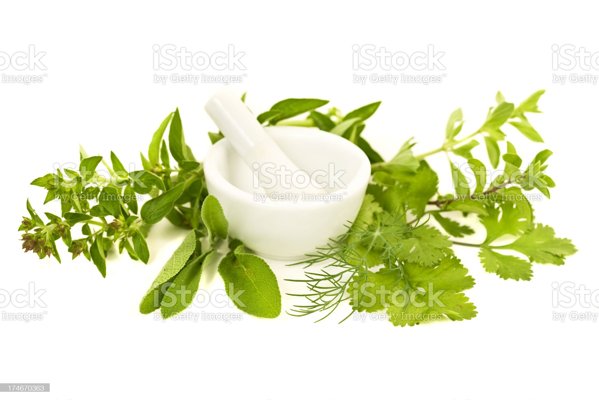 Herb Series royalty-free stock photo