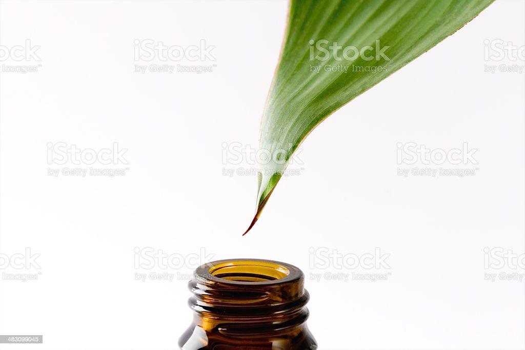 Herbal Essence stock photo