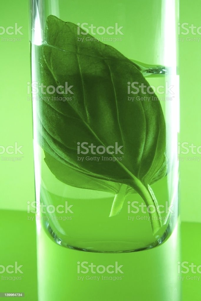 Herbal essences royalty-free stock photo