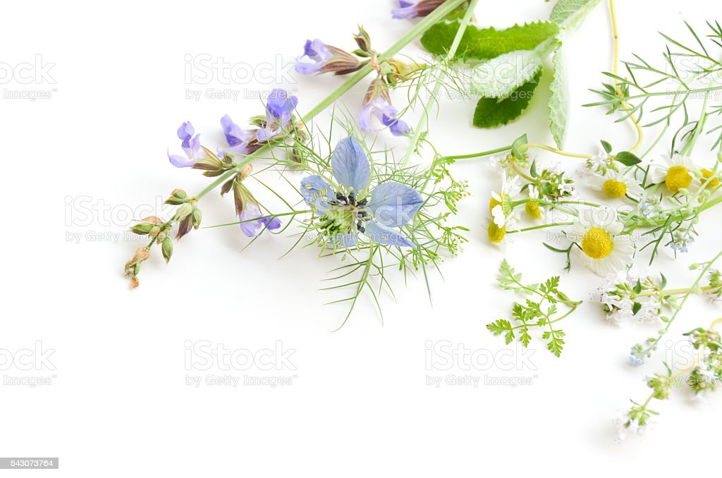 herbal flowers on white background stock photo