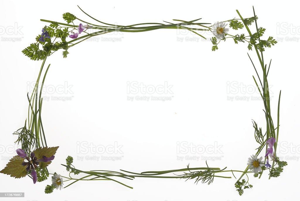 herbal frame royalty-free stock photo