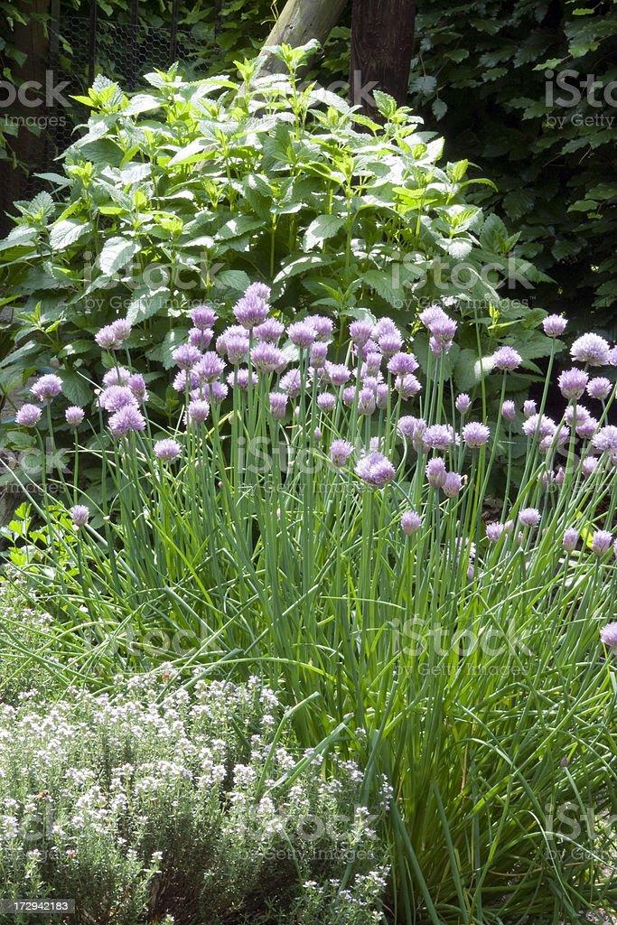 Herbal garden stock photo