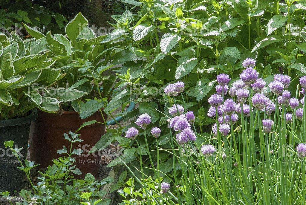 Herbal garden royalty-free stock photo