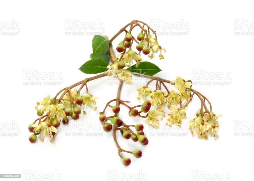 Herbal henna flower,fruit with leaves stock photo