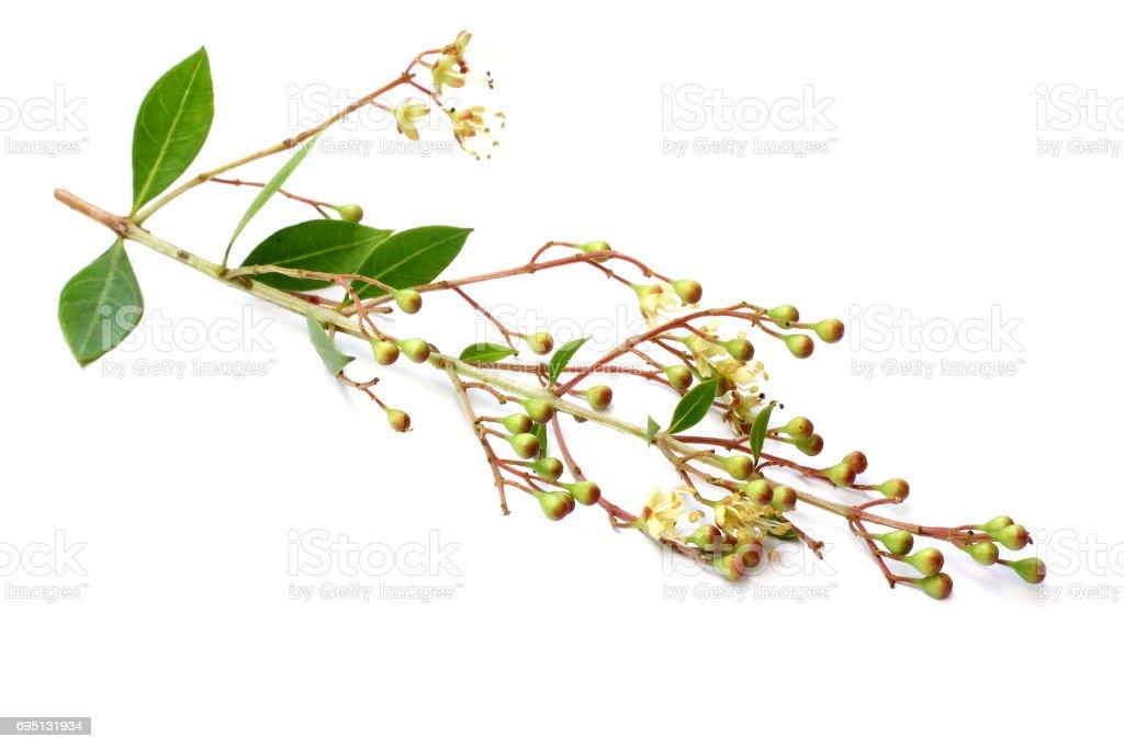 Herbal henna stock photo