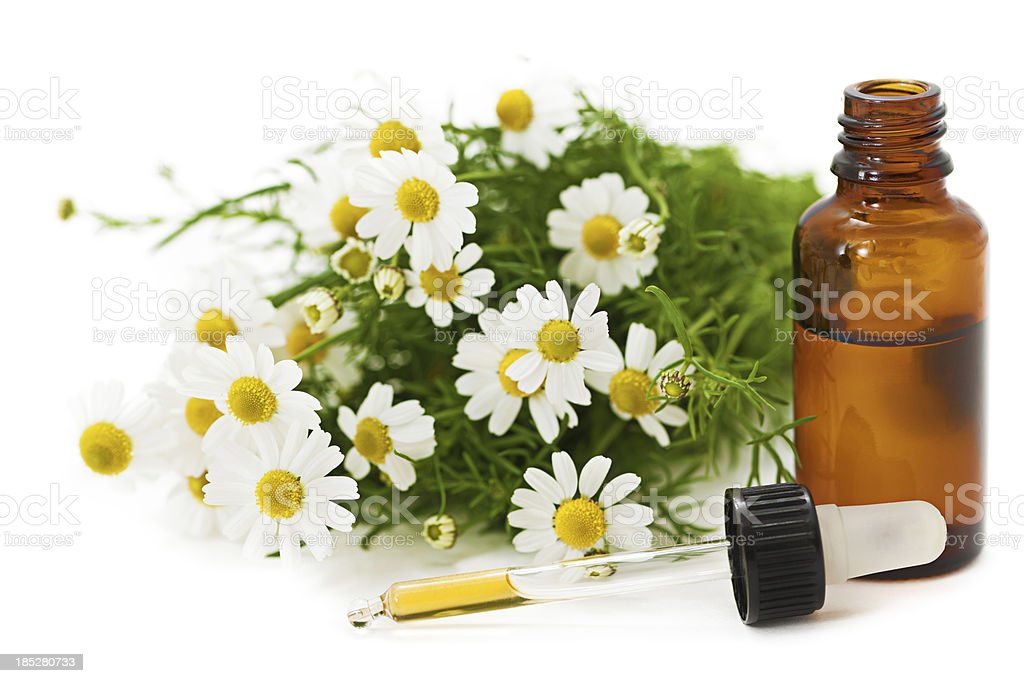 Herbal Medicine: Chamomile stock photo