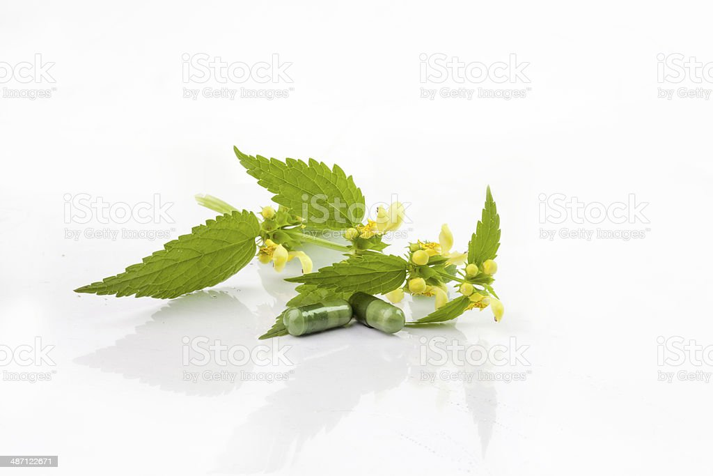 herbal medicine on Stinging Nettle stock photo