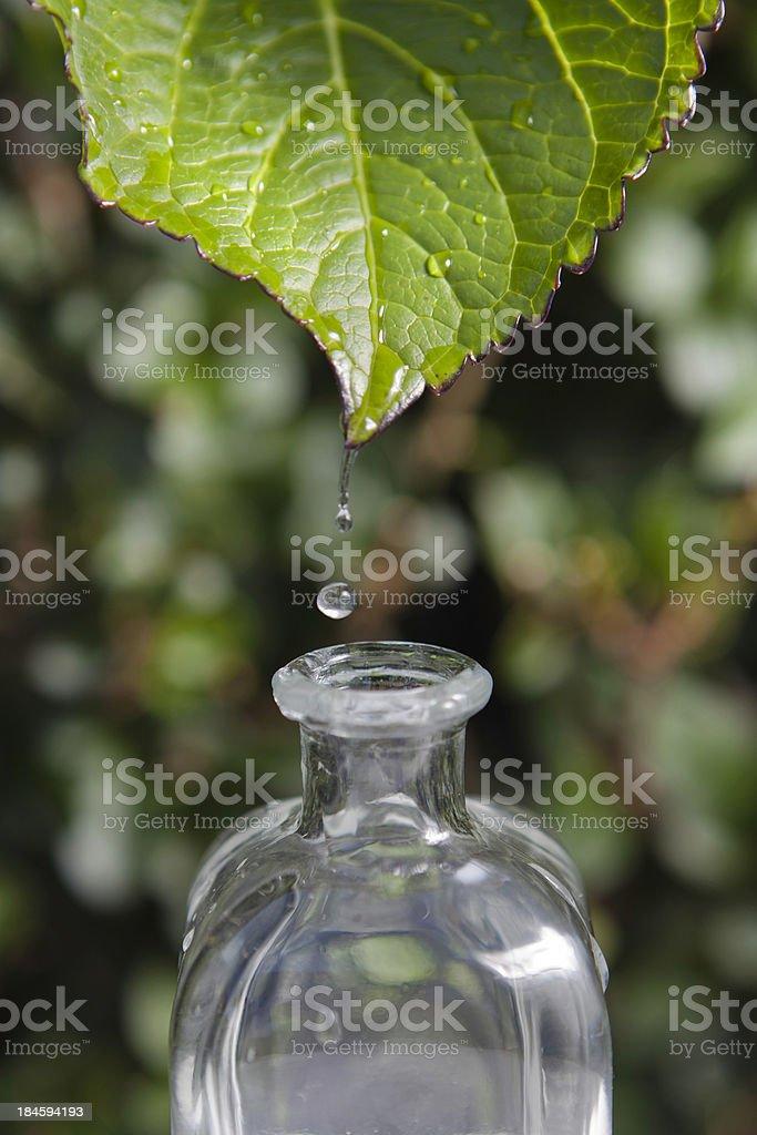 Herbal medicine royalty-free stock photo