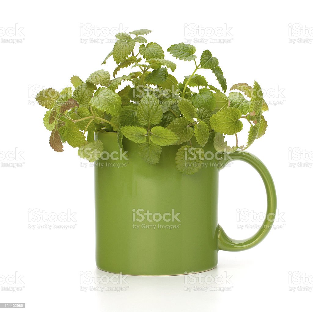 Herbal peppermint tea cup royalty-free stock photo