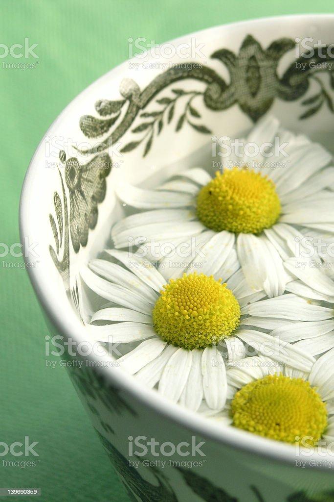herbal tea - camomile royalty-free stock photo