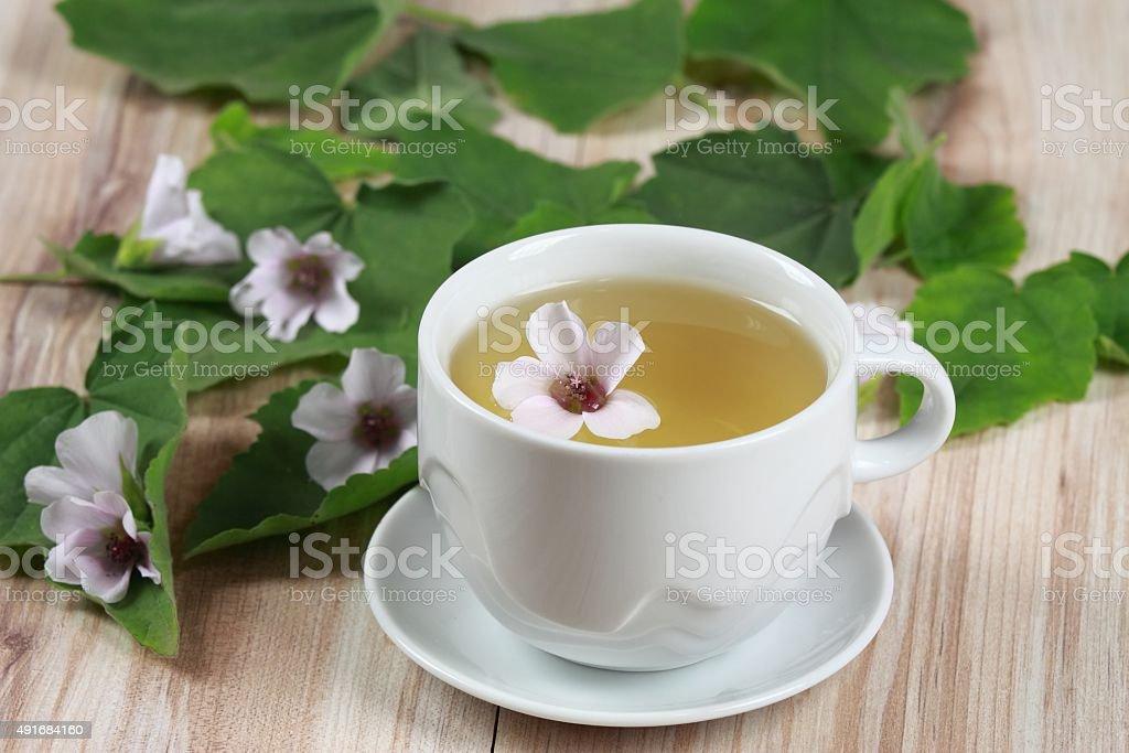 Herbal tea from marshmallow stock photo