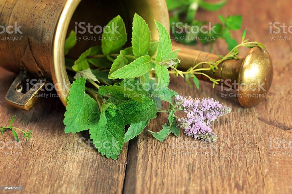 Herbalism stock photo