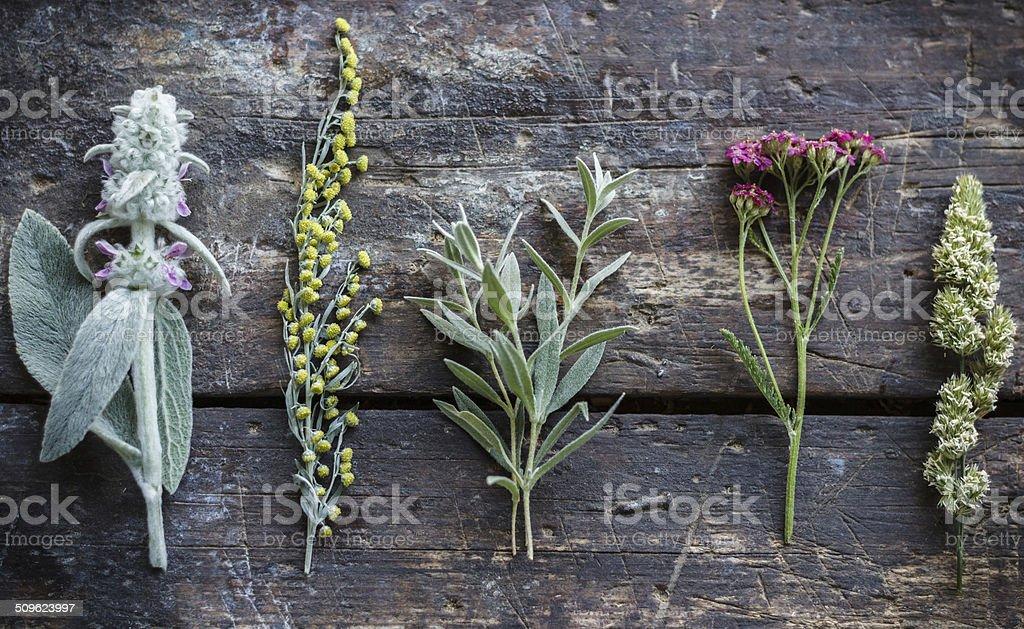 Herbarium on vintage background stock photo