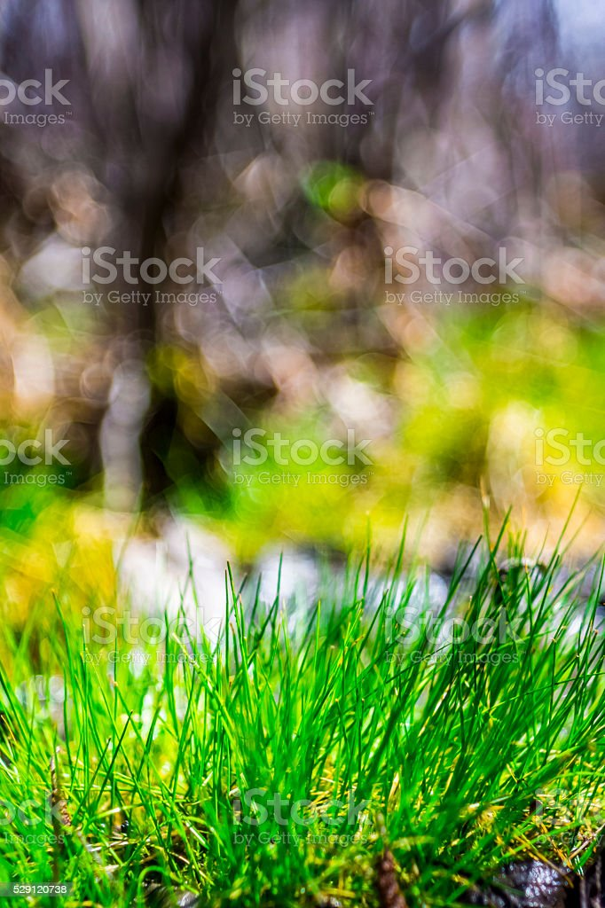 Herbe, gazon, pelouse. stock photo