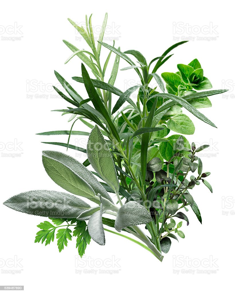 Herbes de Provence (combination of herbs) stock photo