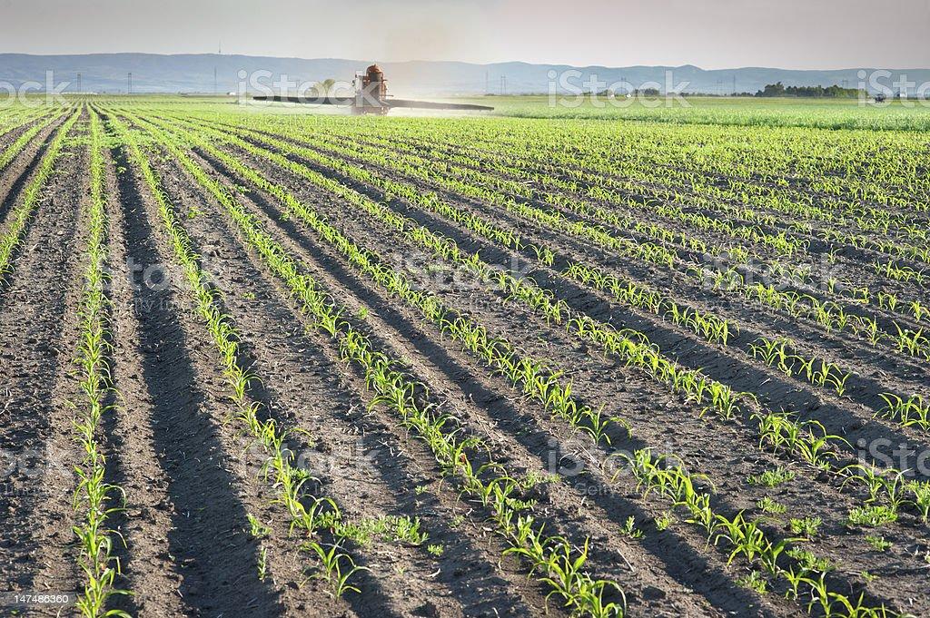 Herbicides spraying royalty-free stock photo