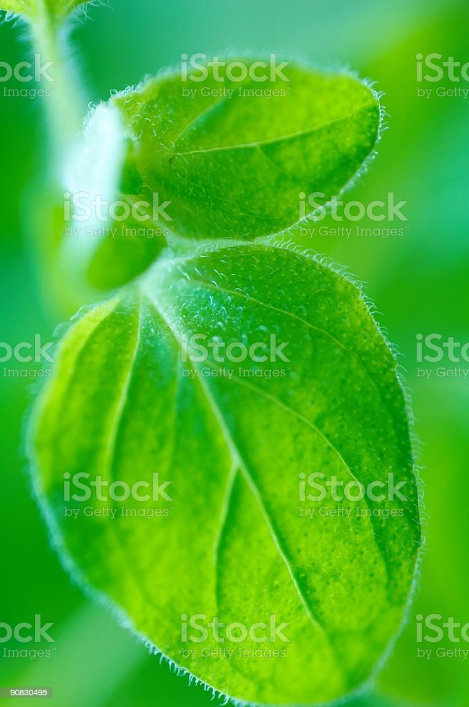 herbs 3 royalty-free stock photo