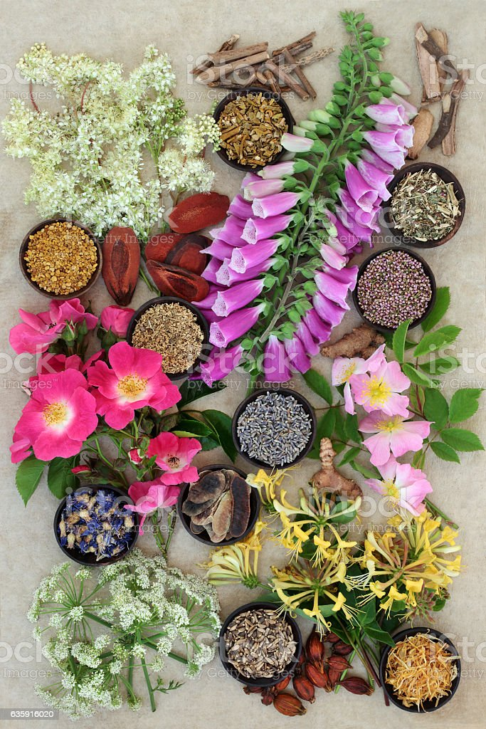 Herbs and Flowers for Health stock photo