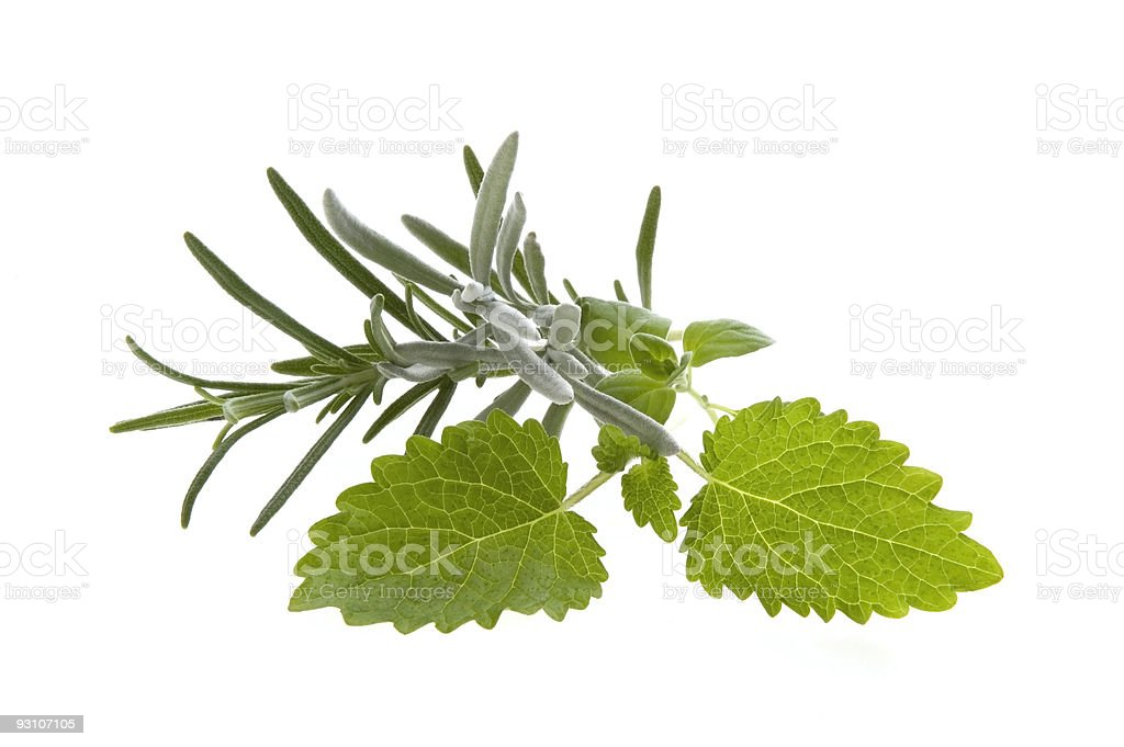 herbs and spices. royalty-free stock photo