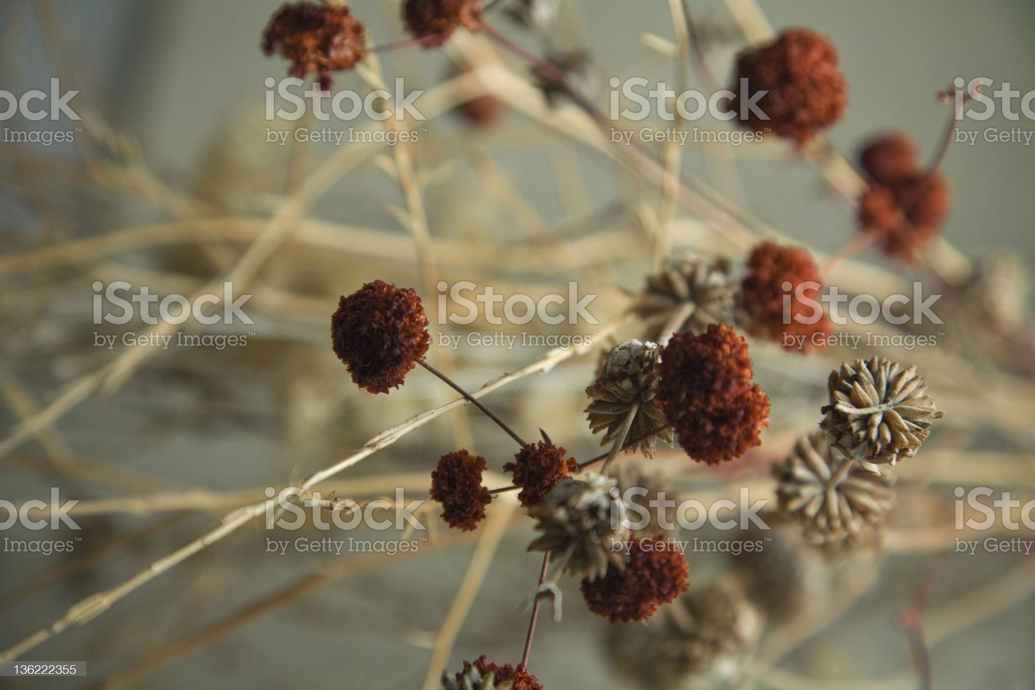 Herbs and weeds nature abstract. royalty-free stock photo
