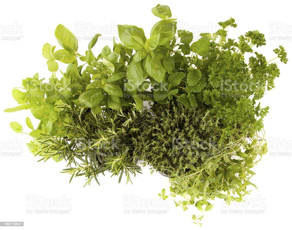 Herbs, Basil, Rosemary herb, Peppermint, Thyme, Parsley, Lemon balm, Marjoram stock photo