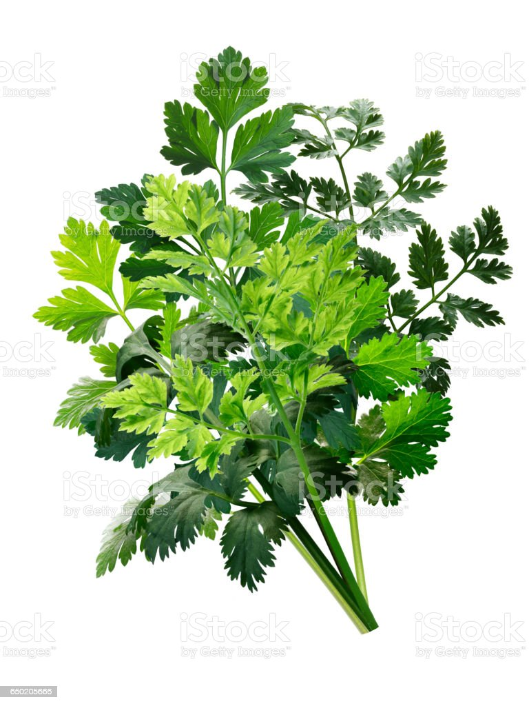 Herbs bouquet combination, paths stock photo