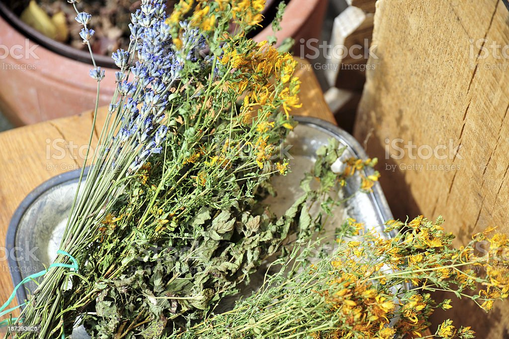 Herbs drying royalty-free stock photo