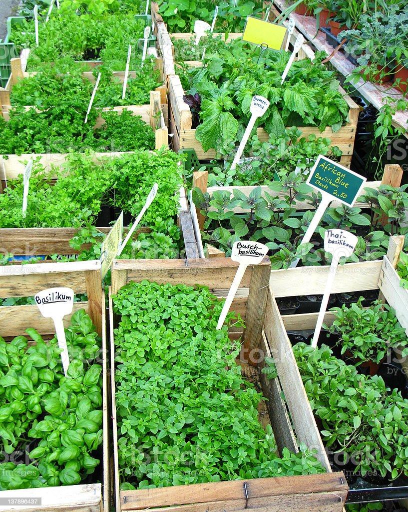 Herbs for the Garden stock photo