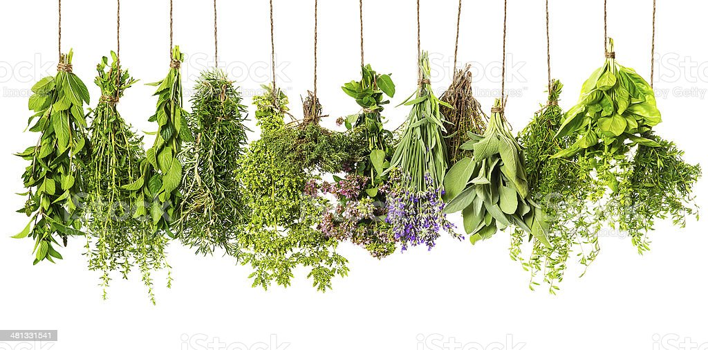 herbs hanging isolated on white. food ingredients stock photo