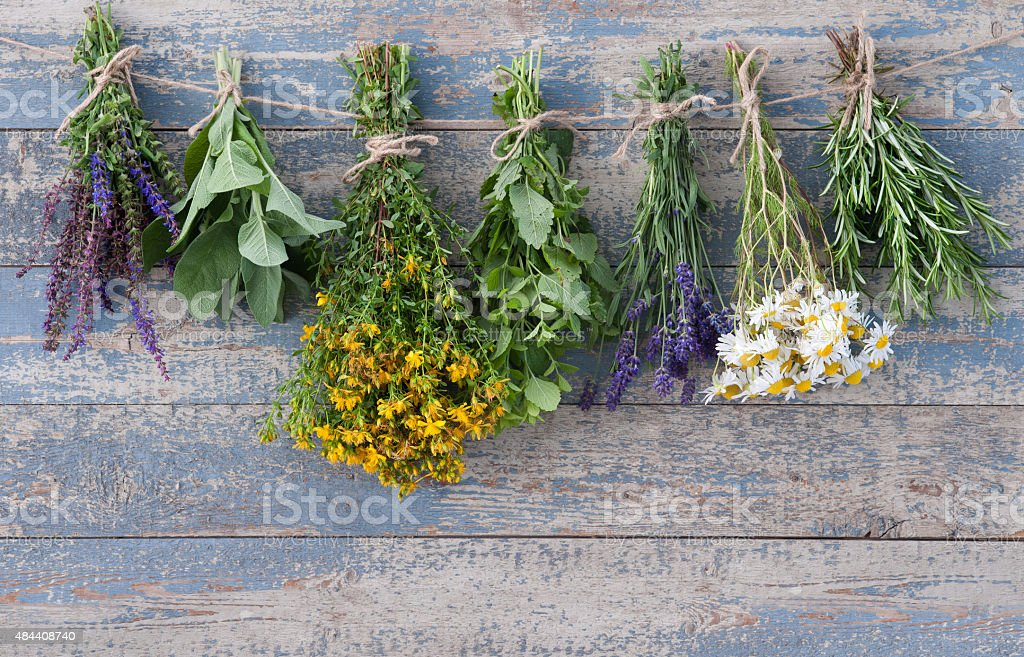herbs hanging on a leash stock photo