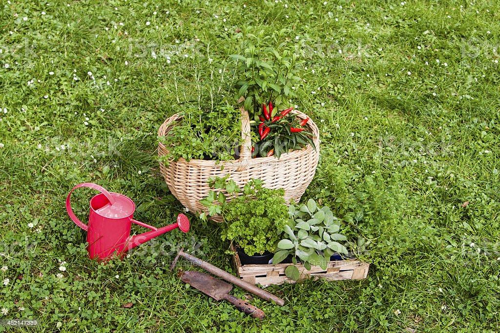 Herbs in a garden royalty-free stock photo